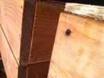 corner of garden box